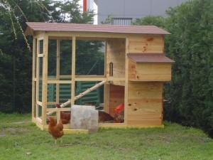 fabriquer sois meme son poulailler bois poules elevage. Black Bedroom Furniture Sets. Home Design Ideas