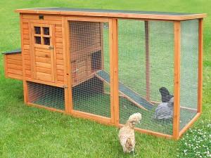 Poulailler pour la sélection de poules d'exposition